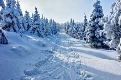 Snowy Tree Lined Path